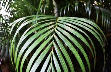 hilton carter inspiratie voor een groen thuis