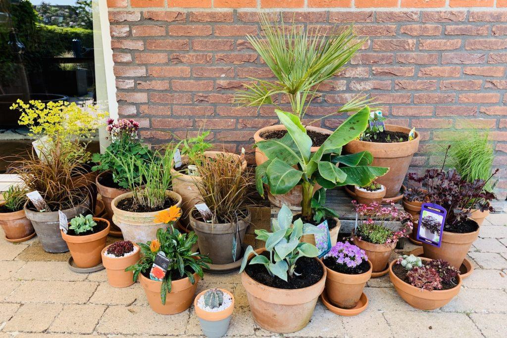 pottenborder tuinpraat jannekes wereld