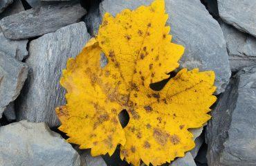 weekend favorieten herfst onrust onstuimig rust