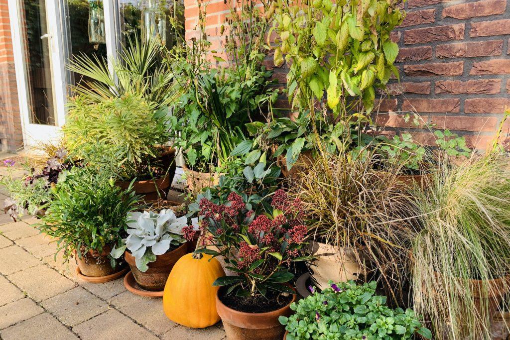 wintertuin pottenborder november