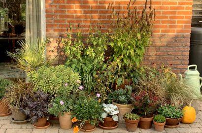 pottenborder winterplanten