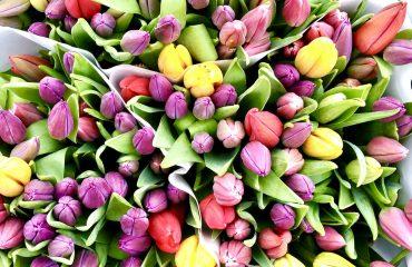 positiviteit tulpen bloemen