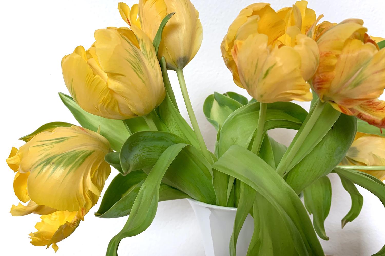 tulpen geel