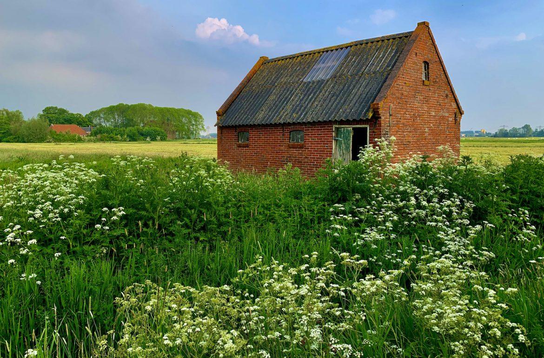 Leegkerk schuur fluitenkruid juni