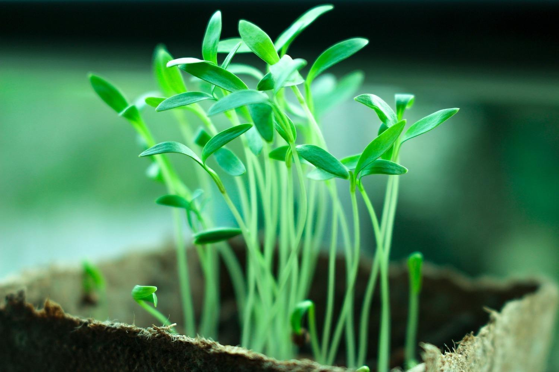 groener leven zaailingen