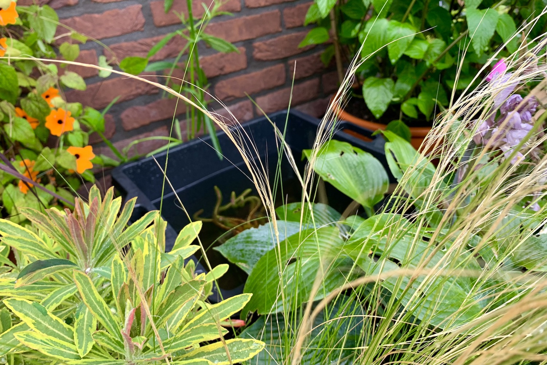 in de tuin - mini vijver
