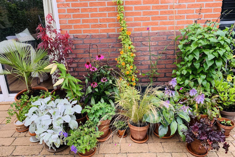 in de tuin - pottenborder