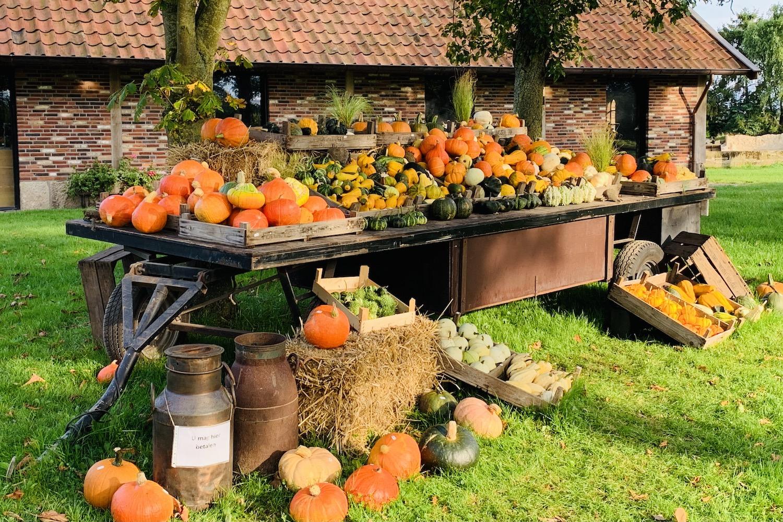 herfst kalebassen en pompoenenkraam